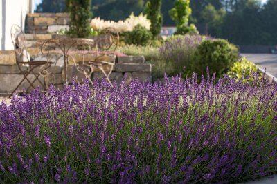 blühender Lavendel vor Gartenspitzplatz
