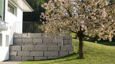 Kirschbaum vor Natursteinmauer