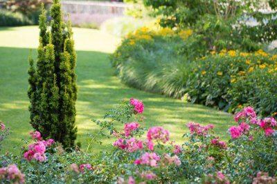 gepflegte Rasenfläche