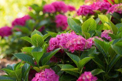 blühende Sommerblumen