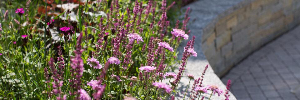Hunkeler Gartenbau Blumenbeet